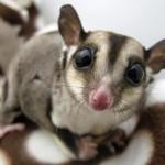 Actualizado el catálogo de especies invasoras