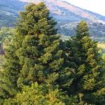 Un SIG predice las especies más adecuadas para reforestar zonas de alta montaña