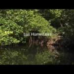 """""""Humedales: manteniendo nuestro planeta con vida y saludable"""""""