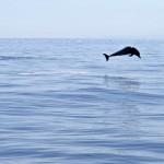 Iniciado Tratado de Naciones Unidas para proteger la vida marina