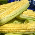 Los países de la UE podrán prohibir el cultivo de transgénicos