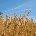 La diversidad genética: una herramienta secreta para luchar contra el cambio climático