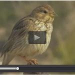 Los viajeros de las aves