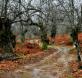 Aracena. Turismo de Aracena