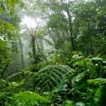 Forest 500: Inversión responsable contra la deforestación