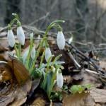 Actividades Ambientales 6 – 7 de Marzo