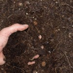 ¿Qué se está haciendo con el material bioestabilizado?