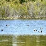 Actividades Ambientales 24 – 26 de Abril