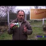 Etiquetado de los huevos y agricultura ecológica