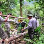 Los bosques jugarán un papel fundamental en la agenda de desarrollo sostenible