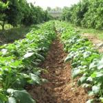 La posición común sobre agricultura ecológica en la UE se pospone a Junio