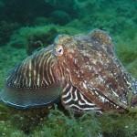 MAGRAMA prepara una Lista Patrón de especies marinas para final de año