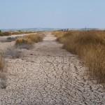 La sequía que afectó Doñana aumentó las emisiones de dióxido de carbono