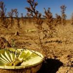 LIFE+ Desiertos Verdes: Proyecto para reforestar zonas semiáridas sin riego