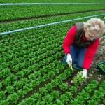 García Tejerina expresa la necesidad de lograr un buen Reglamento sobre producción ecológica