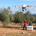 Un nuevo sistema del CSIC cartografía árboles de forma precisa mediante drones