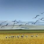El Gobierno de Castilla la Mancha ampliará la protección de la Laguna del Hito para frenar el ATC