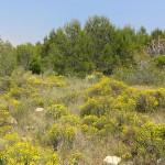 Los terrenos degradados restaurados con lodos de depuradora secuestran hasta un 37% más de carbono