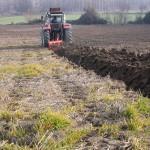 El cultivo ecológico de cereal en regiones semiáridas es más productivo