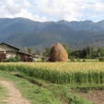 El equilibrio entre agricultura y conservación de bosques es posible