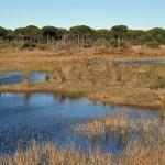 Ley 33/2015 que modifica la Ley 42/2007, del Patrimonio Natural y de la Biodiversidad