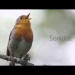 Día Mundial de las Aves 2015