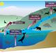 El-declive-de-la-megafauna-interrumpe-el-ciclo-de-nutrientes_image_380