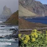 Reservas Marinas de Interés Pesquero en Tenerife: Necesidad y futuro vs. bloqueo y dejadez