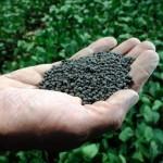 Lodos de depuradora, potencial fertilizante y económico en cultivos agrícolas
