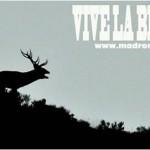 Tiempo de berrea: ecoturismo y avistamiento de fauna