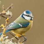 SEO evalúa las poblaciones de aves en invierno con la ayuda de sus voluntarios