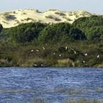 Industria prorroga los sondeos en Doñana hasta 2017