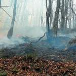 Los incendios forestales asolaron el norte de España este fin de semana