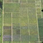 La vegetación renace en los suelos descontaminados