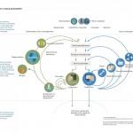 Economía Circular y Ecodiseño. ¿Tienen alguna relación?