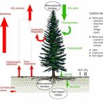 La huella de carbono de las energías renovables. 1- La biomasa.