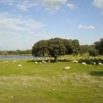 Extremadura coordinará la Comisión de Medioambiente de la UE de las CCAA