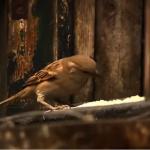 El mundo de los gorriones