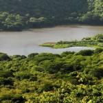 FAO Solicita reducir la deforestación para mejorar el agua en América Latina