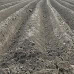 La fijación de carbono en suelos agrícolas exige uniformizar la medida de CO2