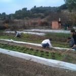 Madrid prueba en 176 hogares la recogida de basura orgánica para hacer compost