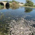 Responsabilidad Medioambiental, Penal y Económica