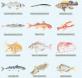 especies mediterráneas