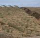 Los cultivos herbáceos son la vegetación más propensa a desaparecer por la desertificación del país. / José Alfonso Gómez Calero