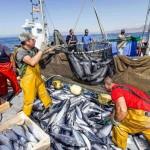 España agotaría hoy su propio pescado