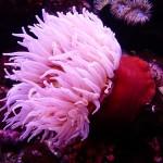 Avanzando en el conocimiento del medio marino