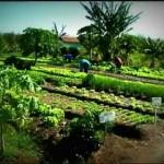 Desertificación: De un desierto de carbón a un oasis de hortalizas