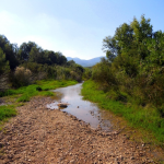 Un estudio propone el uso de nuevos índices ecológicos para evaluar los ecosistemas