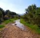 Vegetación de ribera del río Corneros que sufre estrés hídrico por la disminución de caudal en verano y por la extracción de agua para riego. Ribera dominada por juncos, tarays y otras especies adaptadas a la sequía http://www.um.es/