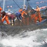 El primer tratado mundial contra la pesca ilegal entra en vigor